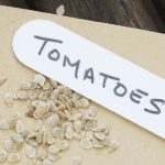 Tomato Seeds on seed envelope with label