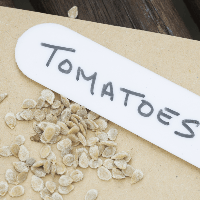 How to Save Tomato Seeds - Easily