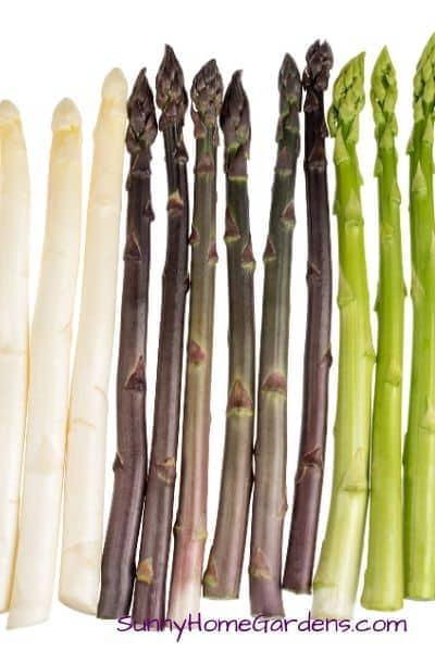 Asparagus Varieties - White, purple, and green