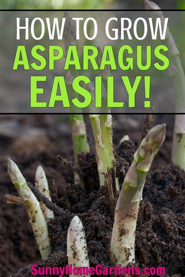 How to Grow Asparagus Pin