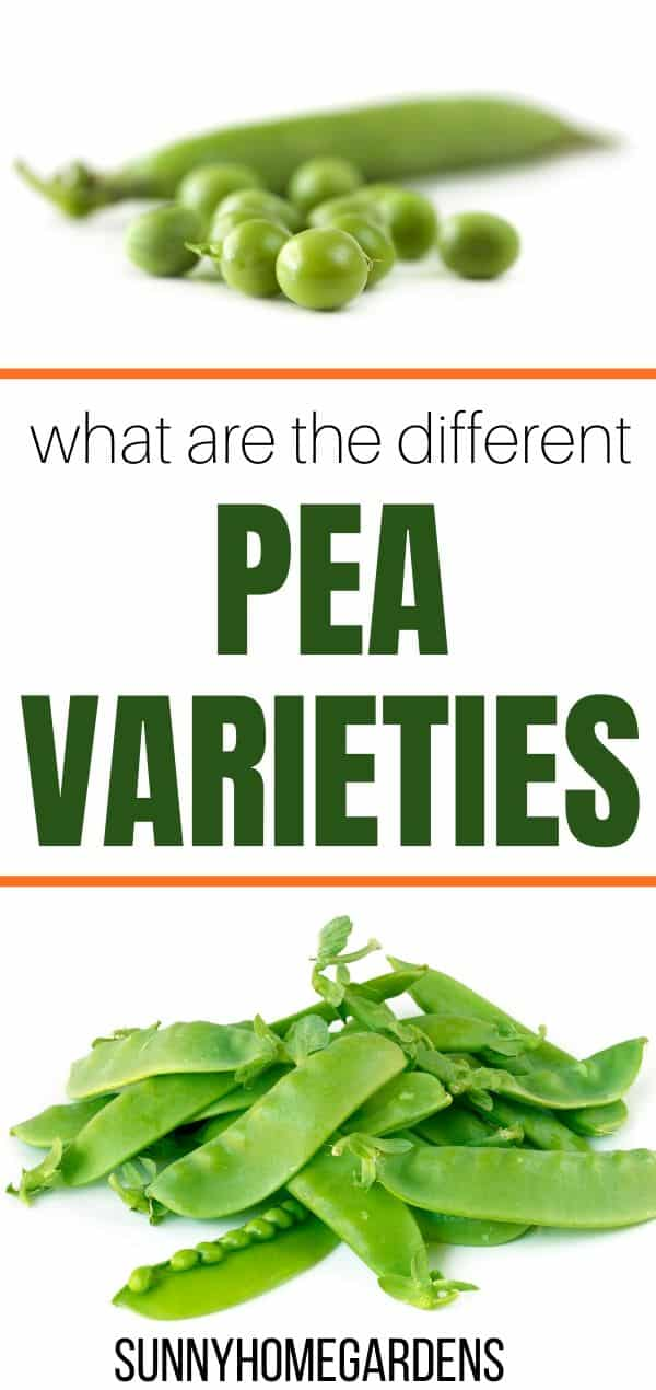 What are the Different Pea Varieties Pin
