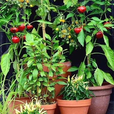 easy vegetables to plant in pots on patio
