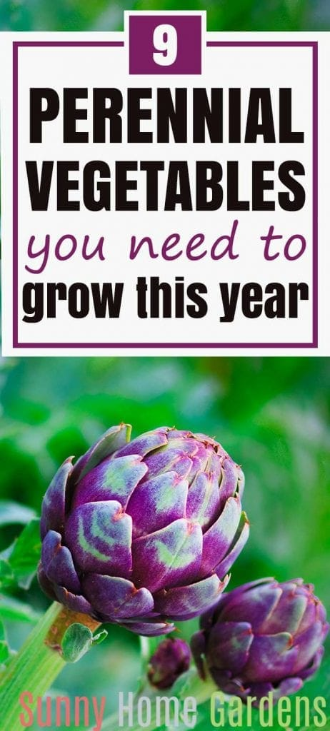 9 Perennial Vegetables You Need to Grow this Year Pin Image