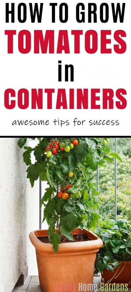 how to grow tomatoes in containers pinterest pin