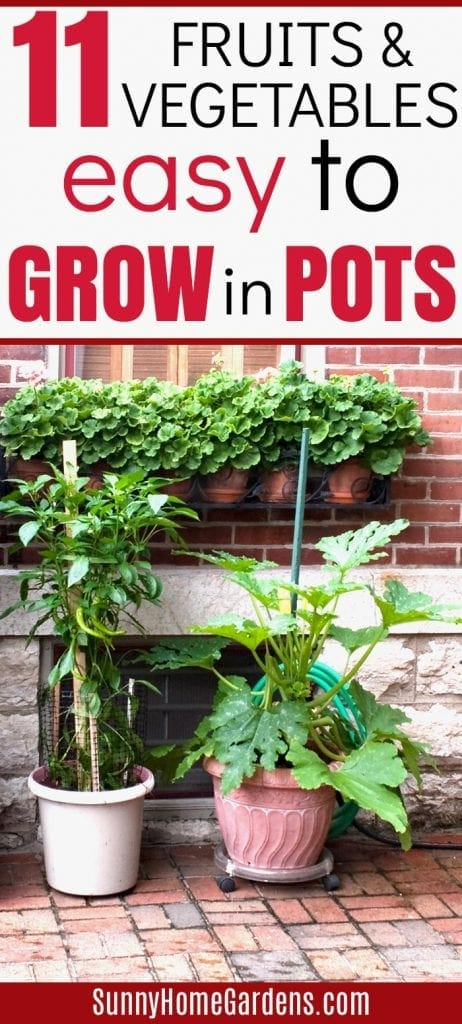 11 easy vegetables to grow in pots pin image for Pinterest