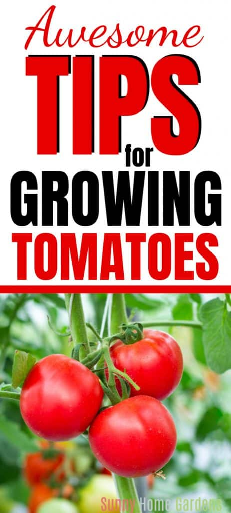 Pinterest Pin saying tips for growing tomatoes with red tomatoes