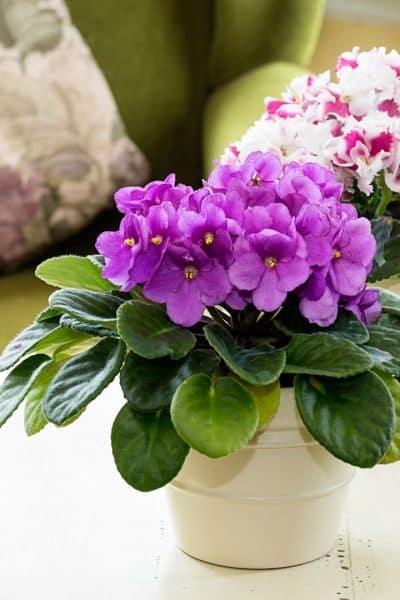 best pots for african violets