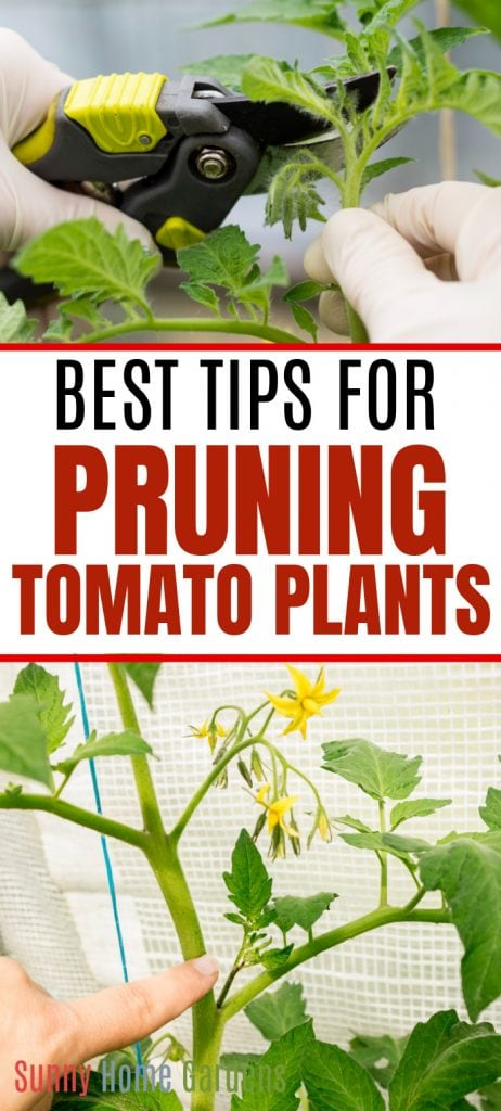 "Top of pin image has a picture of someone pruning a tomato branch, middle says ""Best tips for pruning tomato plants"" and the bottom is a picture of a tomato plant and someone pointing to a branch to trim"