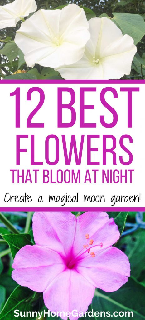 """Moon flowers on top, middle says """"12 best flowers that bloom at night.  create a magical moon garden.  bottom has a picture of  four o'clocks."""