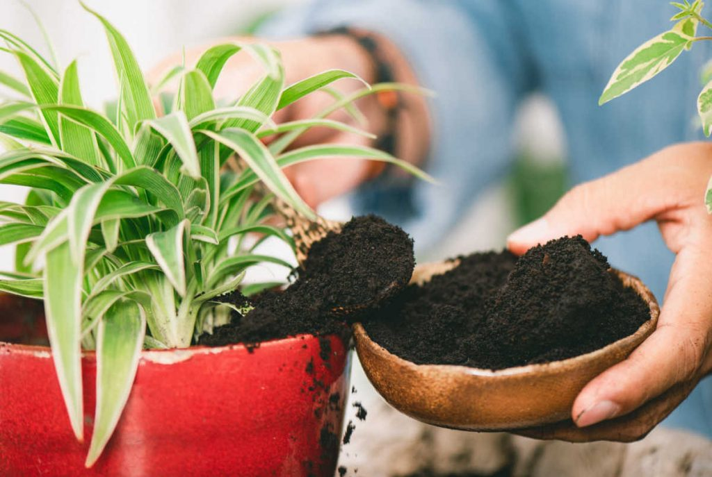 Coffee grounds being spooned into a flower pot.