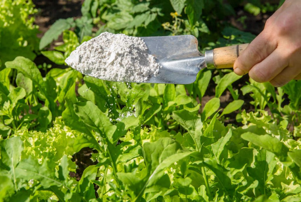 Diatomaceous earth coming off a trowel into some plants.