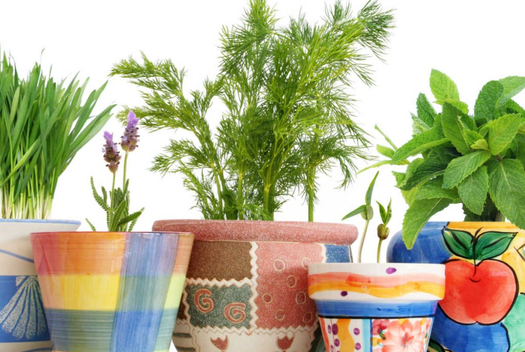 Vibrant colored containers with fresh herbs.  Dill in the middle pot.