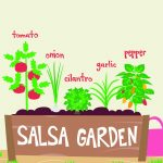 "Illustration of a garden container that says ""salsa garden"" on the front and with these plants labeled in the planter from left to right: tomato, onion, cilantro, garlic, pepper."