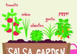 """Illustration of a garden container that says """"salsa garden"""" on the front and with these plants labeled in the planter from left to right: tomato, onion, cilantro, garlic, pepper."""