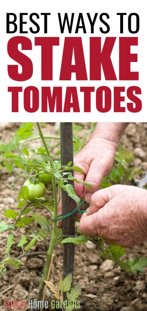 """Top says """"Best ways to stake tomatoes"""" and bottom has a picture of someone tying a tomato plant to a wooden stake."""