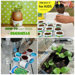 collage of images: top left seedlings in eggshells, top right compost being put into yogurt container, bottom right seedlings in a plastic container, bottom let k-cups being filled with dirt.