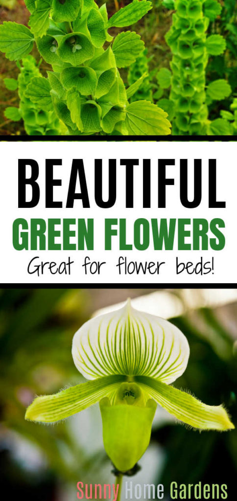 """Pin image: top says """"Beautiful green flowers: great for flower beds"""" and bottom is a green orchid."""